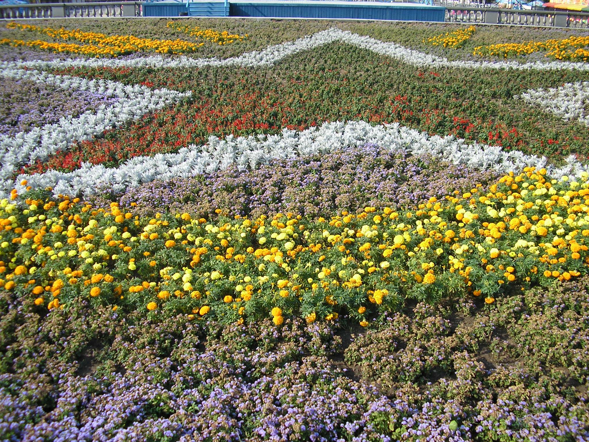 Blumen im Gorki-Park